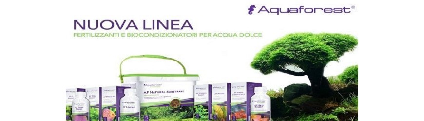 Linea Dolce